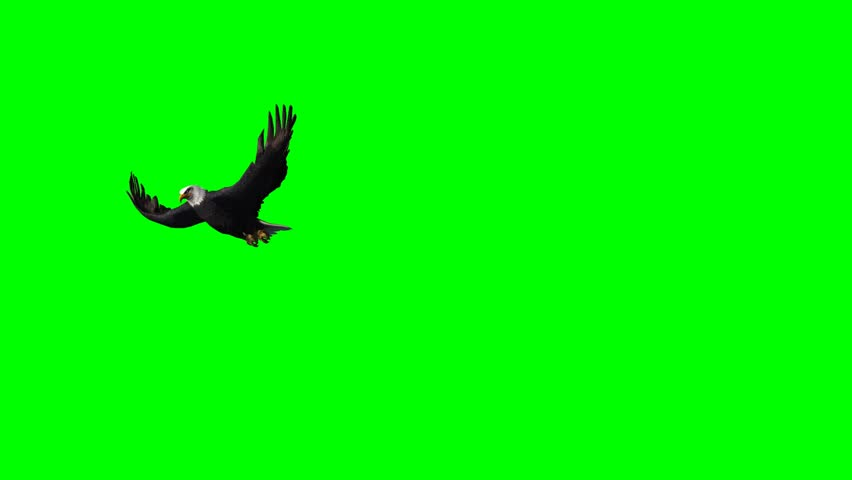 eagle flies past - 3 different views - green screen