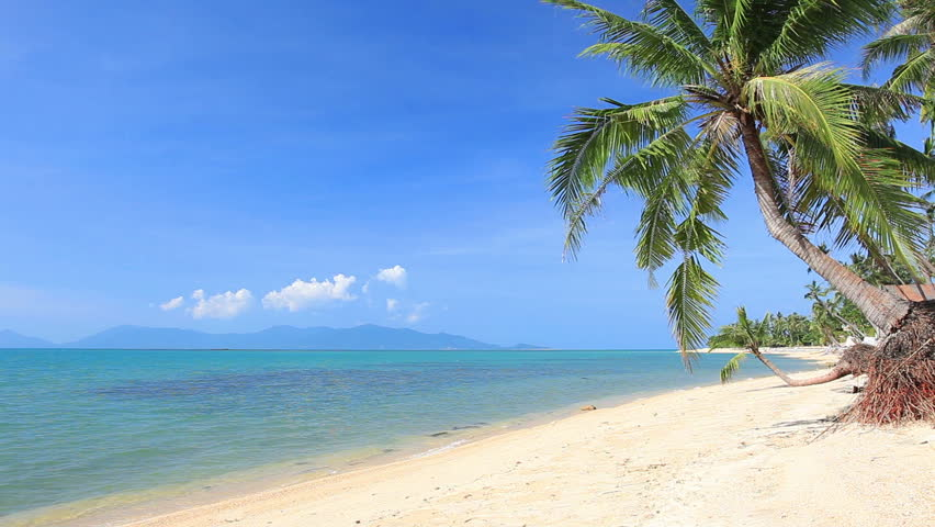 Tropical beach and palm tree   Shutterstock HD Video #8852365