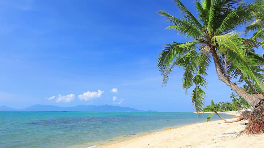 Tropical beach and palm tree   Shutterstock HD Video #8852380