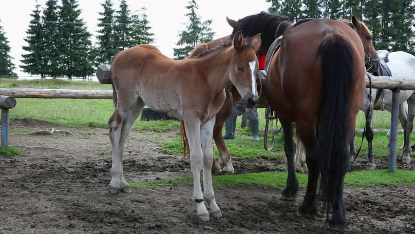Beautiful Young Horse Mother Colt Stock Footage Video 100 Royalty Free 8884747 Shutterstock