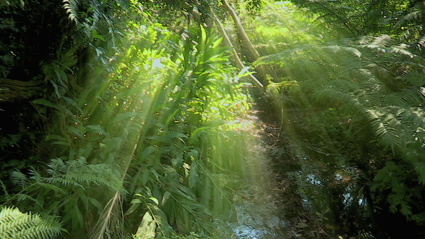 Pan of sun-ray lit forest to little stream.