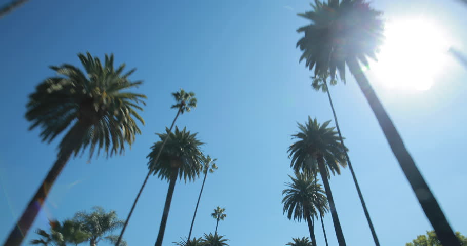 Palm Trees moving driving car window POV shot  | Shutterstock HD Video #9047434