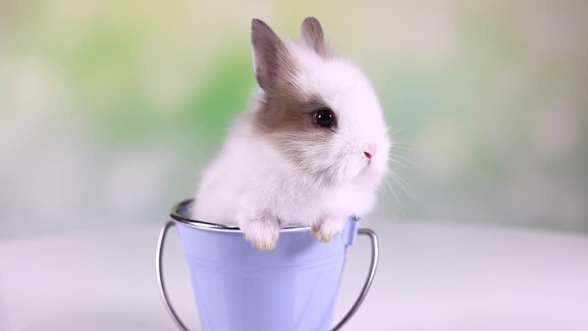 Baby bunny, rabbit  | Shutterstock HD Video #9123131