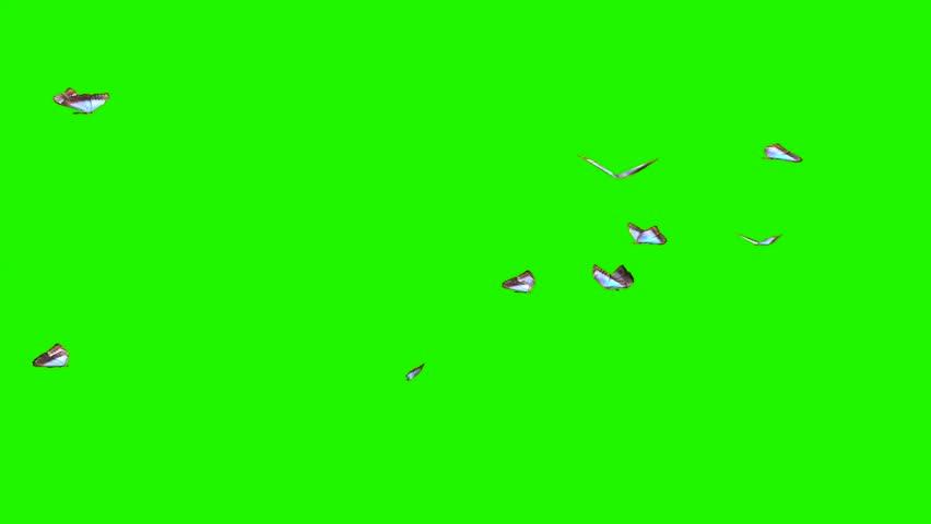 Butterflies - small swarm on green screen | Shutterstock HD Video #9232826