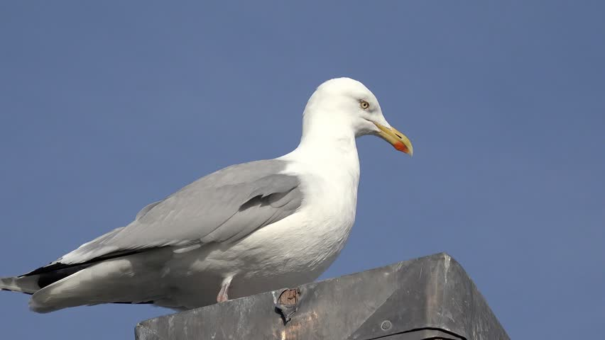 Seagull sitting on pole at the north sea | Shutterstock HD Video #9317891