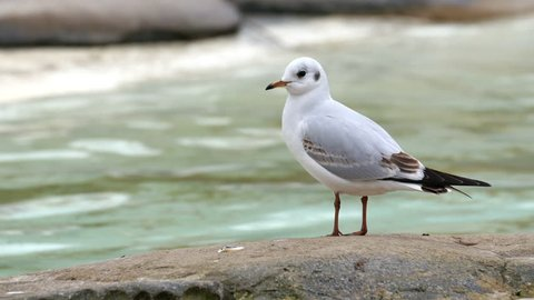White small birds standing on a rock. Shown also is the rushing river on the background
