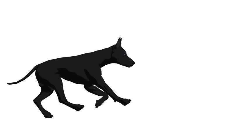 Dog running on a white background
