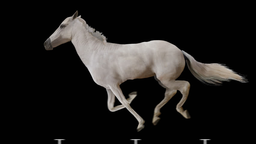White horse runs gallop. Isolated and cyclic animation. | Shutterstock HD Video #9454046