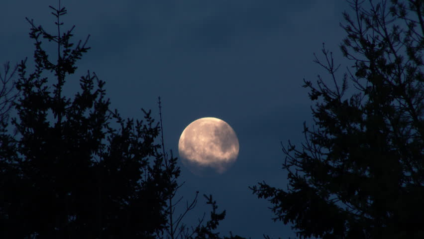 4K Full moon at night rising between evergreen tree forest with clouds passing by, real time.