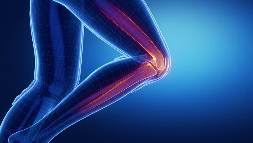 Focused on knee anatomy in loop zoom in