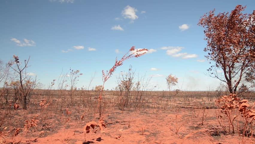 Cerrado vegetation after fire in Brazilian State Park Jalapão - Tocantins - Brazil
