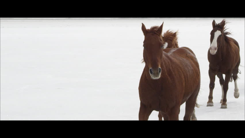 Horses running in slow motion on the white Bonneville Salt Flats in Utah as it is snowing. Wide screen