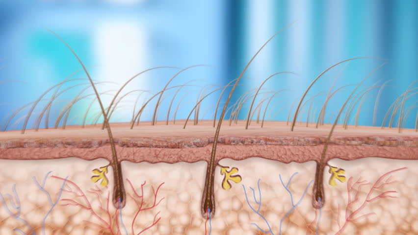 hair follicle growth