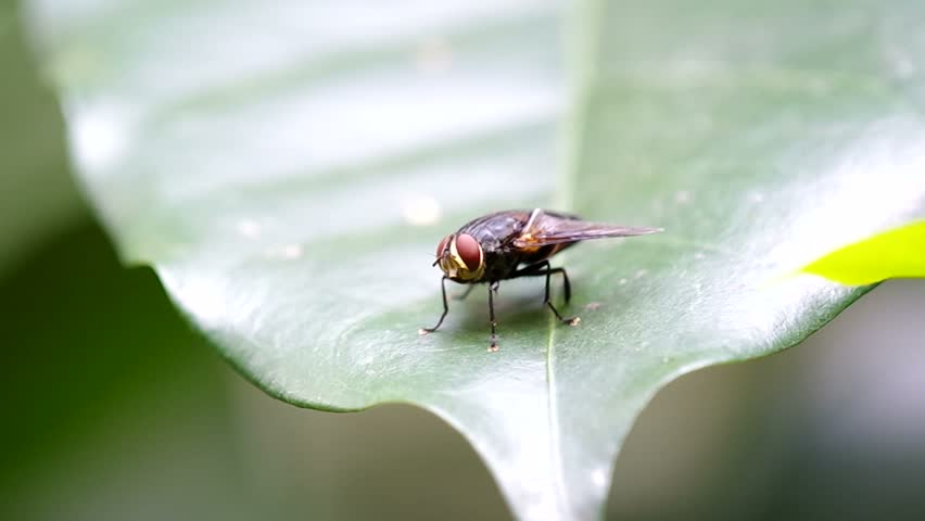 A fly is fast flying away from the leaf | Shutterstock HD Video #9794795