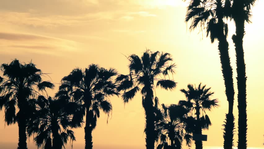 Palm trees in the sun backlighting | Shutterstock HD Video #9822092