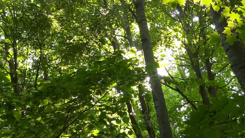 Spring leaves sliding | Shutterstock HD Video #9836795
