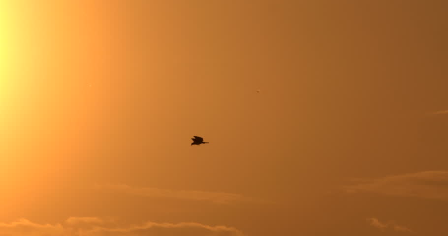 Silhouetted eagle flying in front of sunset in slow motion.  Good for titles and backgrounds. #9957551