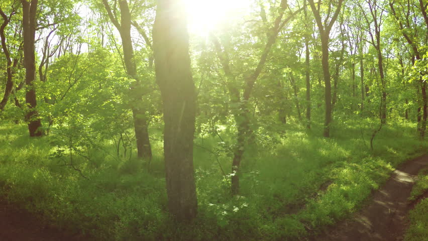 Camera on steadicam spring forest backlit sun | Shutterstock HD Video #9972302