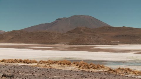 video footage of the Laguna Hedionda with Flamingos in the Andes of Bolivia